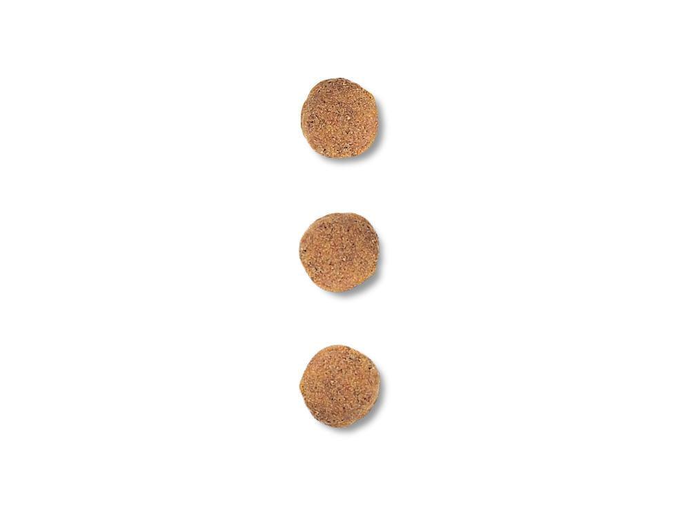 キブル画像 低分子プロテイン 小型犬用