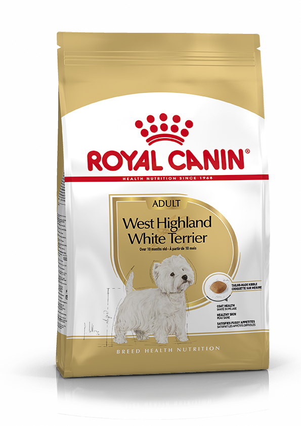 West Highland Terrier Adult