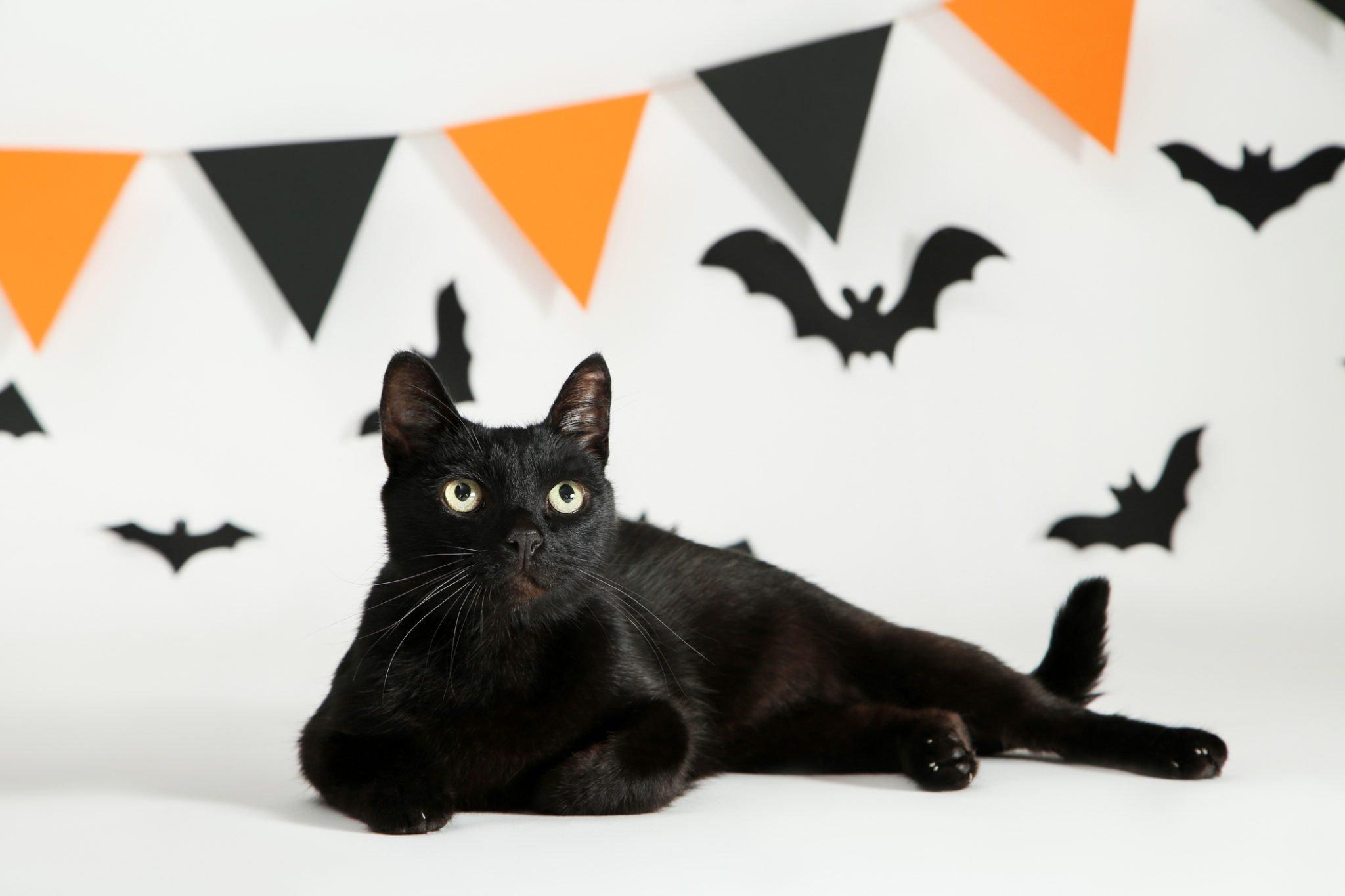 Gatos Pretos e Halloween