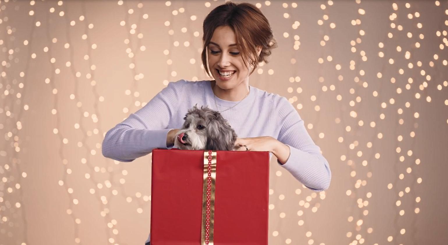 """Global Holiday Campaign """"Pet não é um brinquedo"""""""